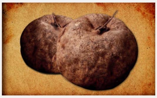 プエラリアミリフィカの写真