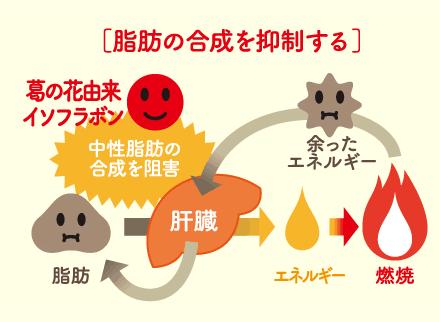 シボヘール,お腹,ウエスト,脂肪,葛の花,脂肪合成の図